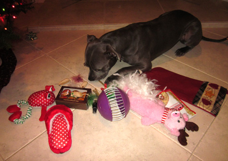 Remys1stChristmas2